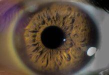 Lutenol Vision Support Formula